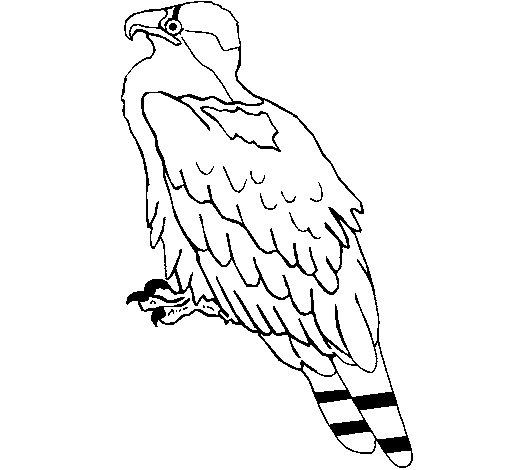 Coloriage de Aigle pour Colorier