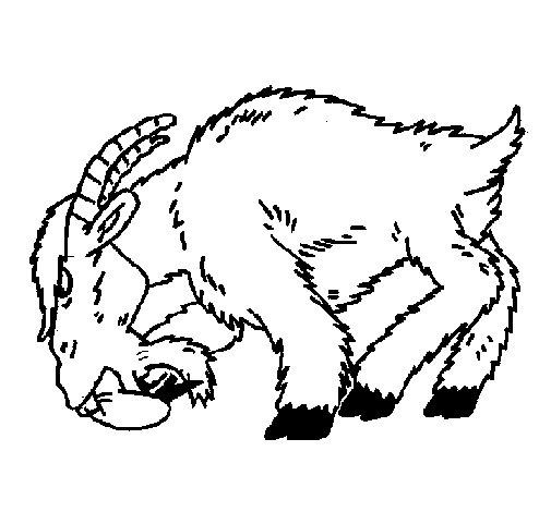 Coloriage de Chèvre en colère pour Colorier