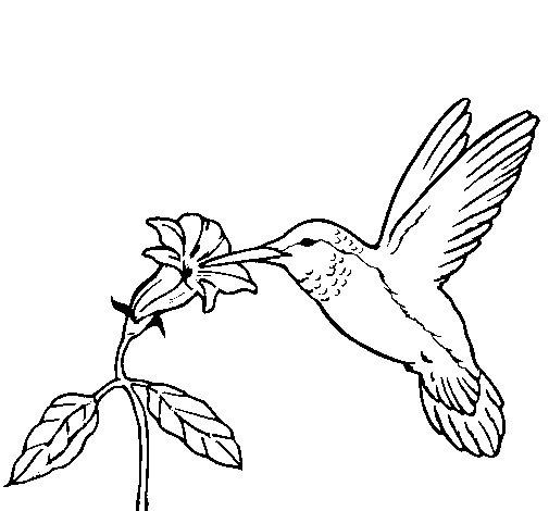 Coloriage de colibri et une fleur pour colorier - Une fleur dessin ...