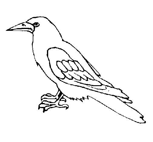 Coloriage de corbeau pour colorier - Coloriage corbeau ...