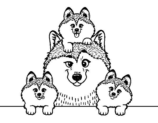 Coloriage de Famille Husky pour Colorier