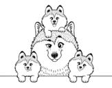 <span class='hidden-xs'>Coloriage de </span>Famille Husky à colorier
