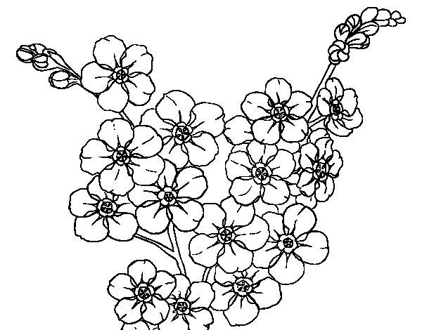 Coloriage de fleur de cerisier pour colorier - Dessin fleur de cerisier ...