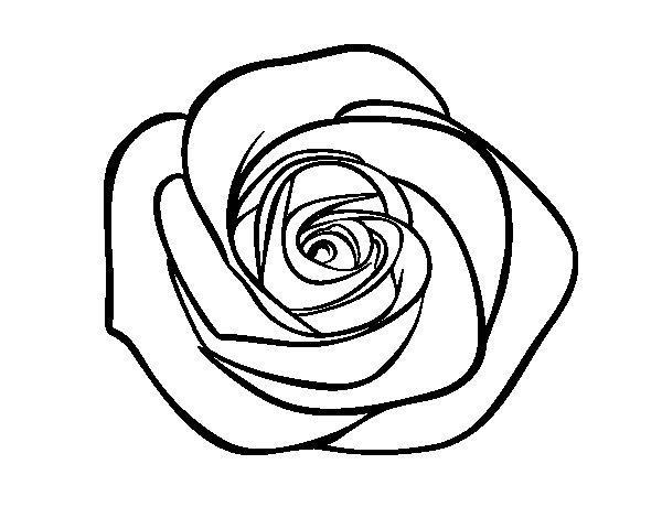 Coloriage de fleur de rose pour colorier - Coloriage de rose ...