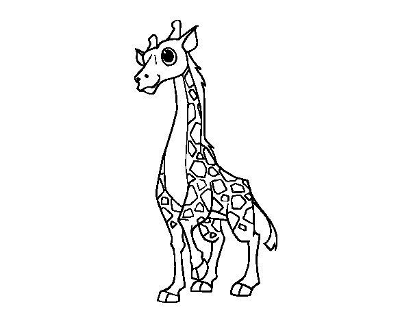Coloriage de Girafe féminin pour Colorier