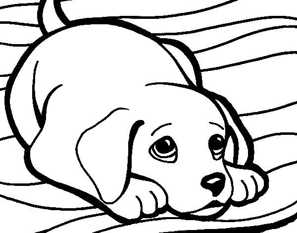 Coloriage de Petit chien sur le tapis pour Colorier