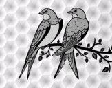 Paire d'oiseaux