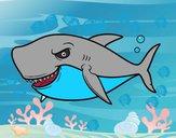 Requin de grandes dents