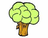 Légumes brocoli