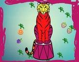 Tiger du cirque