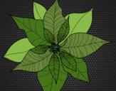 Coloriage Fleur en poinsettia colorié par KAKE2